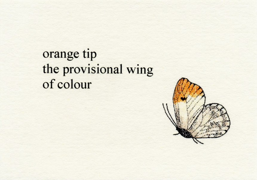 Orange Tip the Provisional Wing of Colour (2011), Moschatel Press (GSA Mackintosh Library, Thomas A. Clark Collection)
